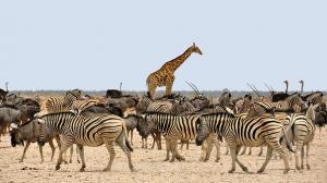La Namibie, une destination qui offre des multiples découvertes culturelles