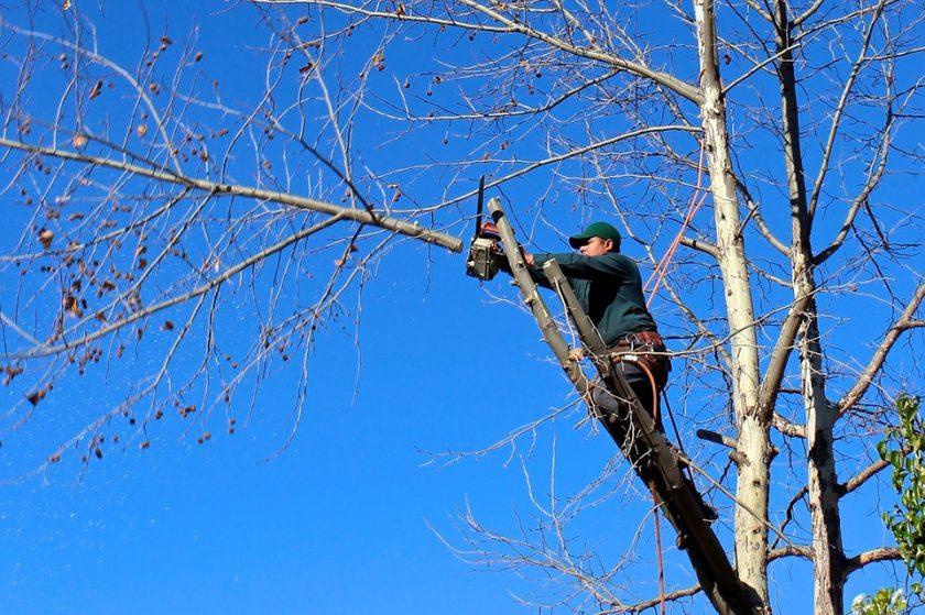 Quels sont les différents types d'élagage d'arbre?